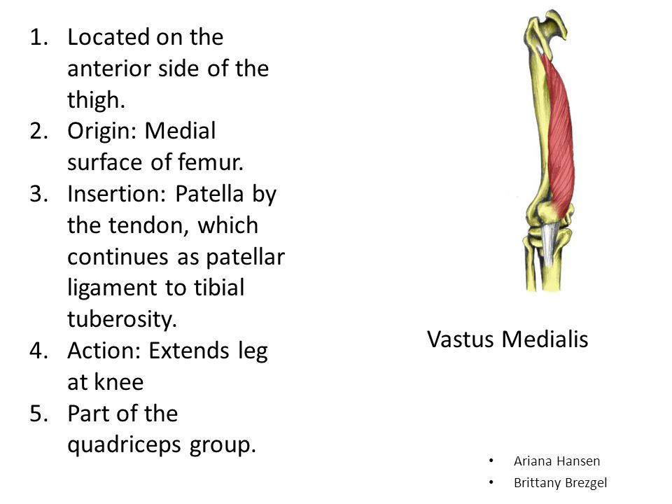 Located on the anterior side of the thigh.