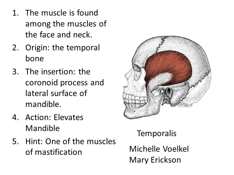 The muscle is found among the muscles of the face and neck.