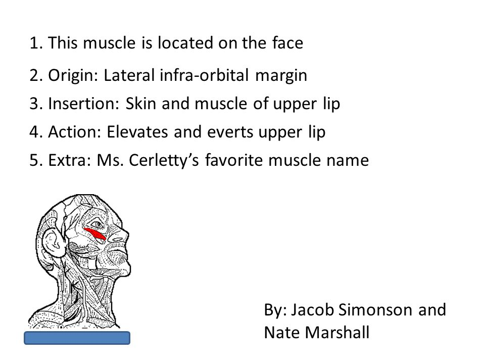 1. This muscle is located on the face