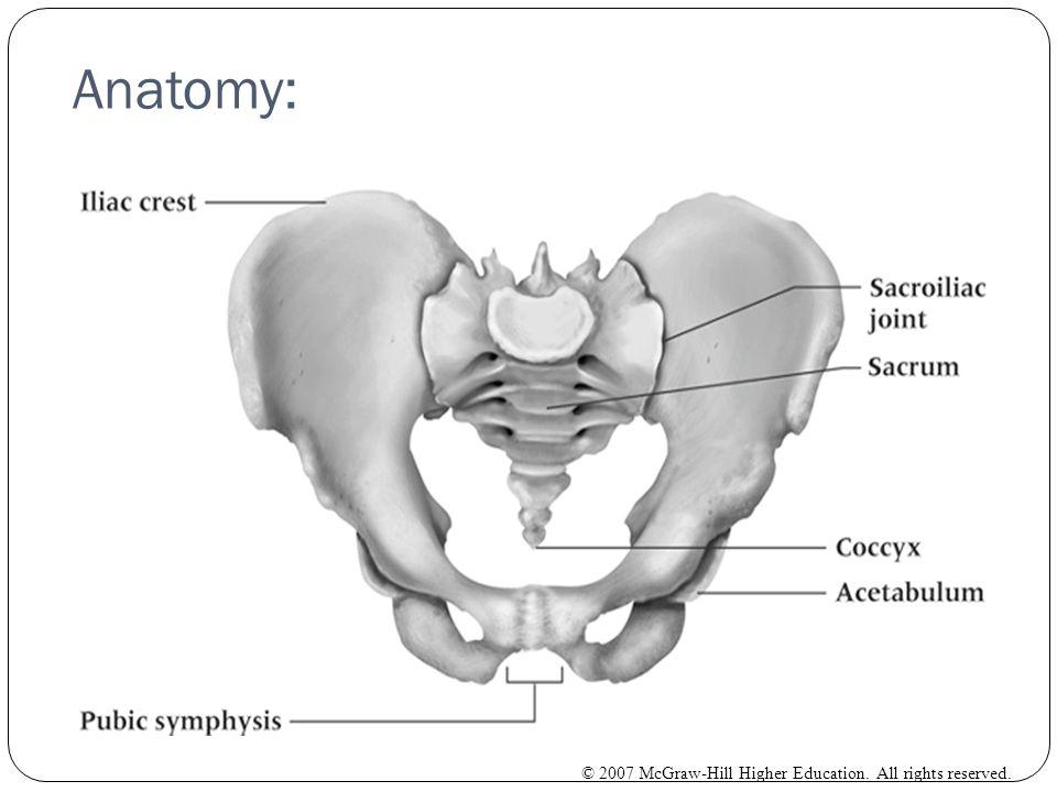 Anatomy: