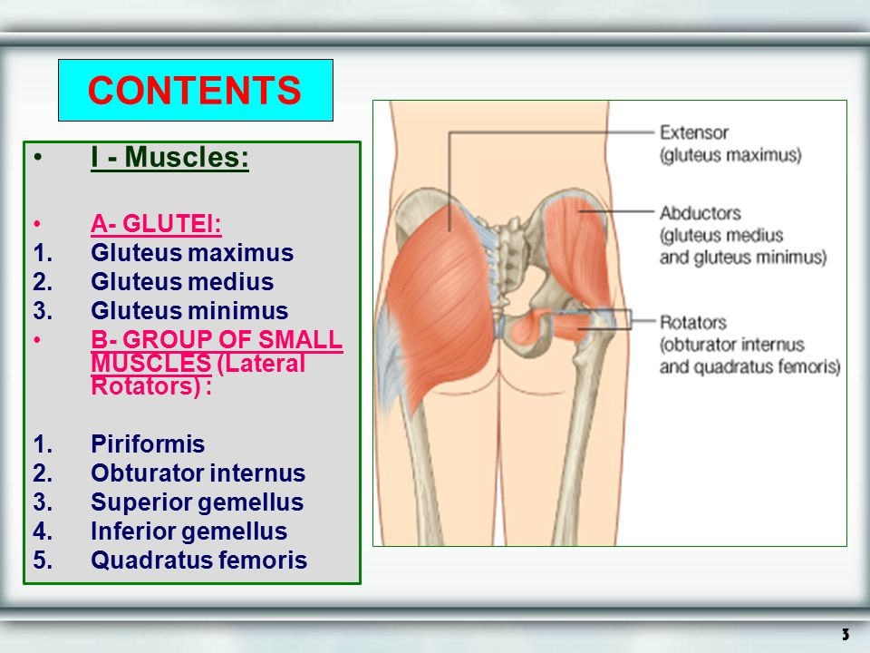 CONTENTS I - Muscles: A- GLUTEI: Gluteus maximus Gluteus medius