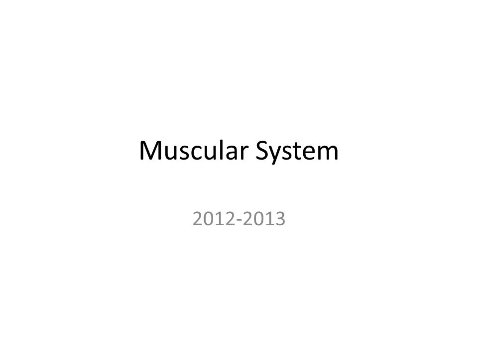Muscular System 2012-2013