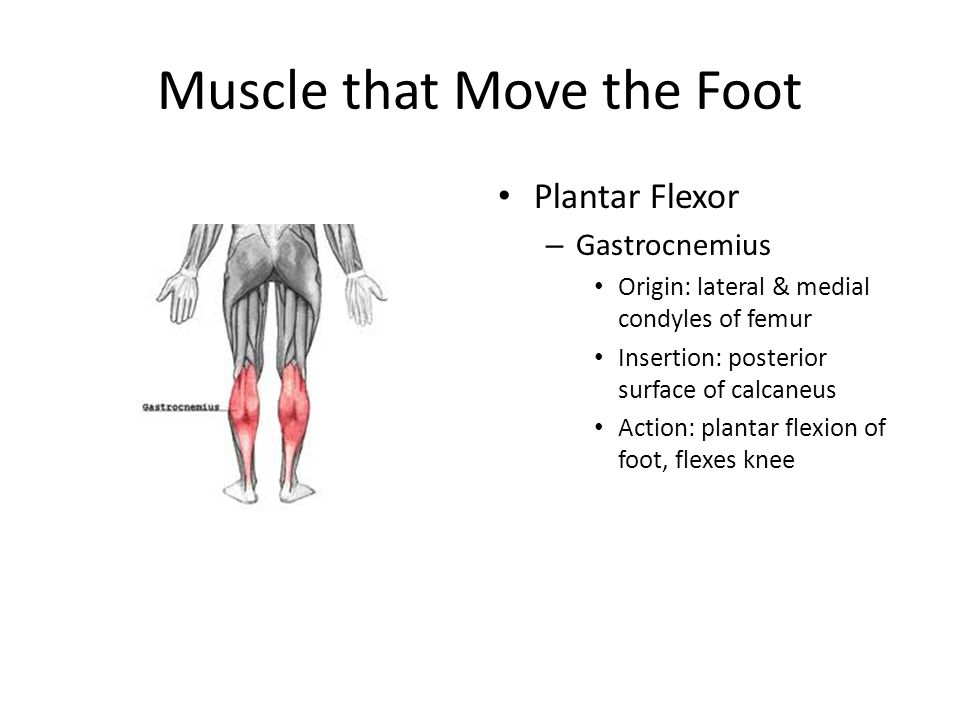 Muscle that Move the Foot