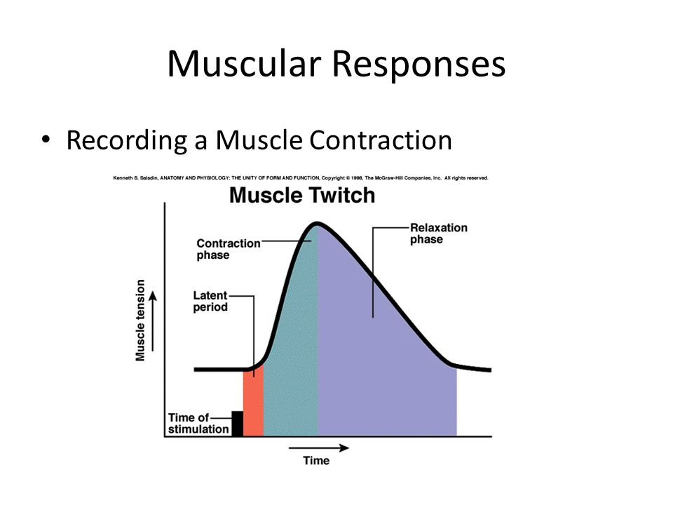 Muscular Responses Recording a Muscle Contraction