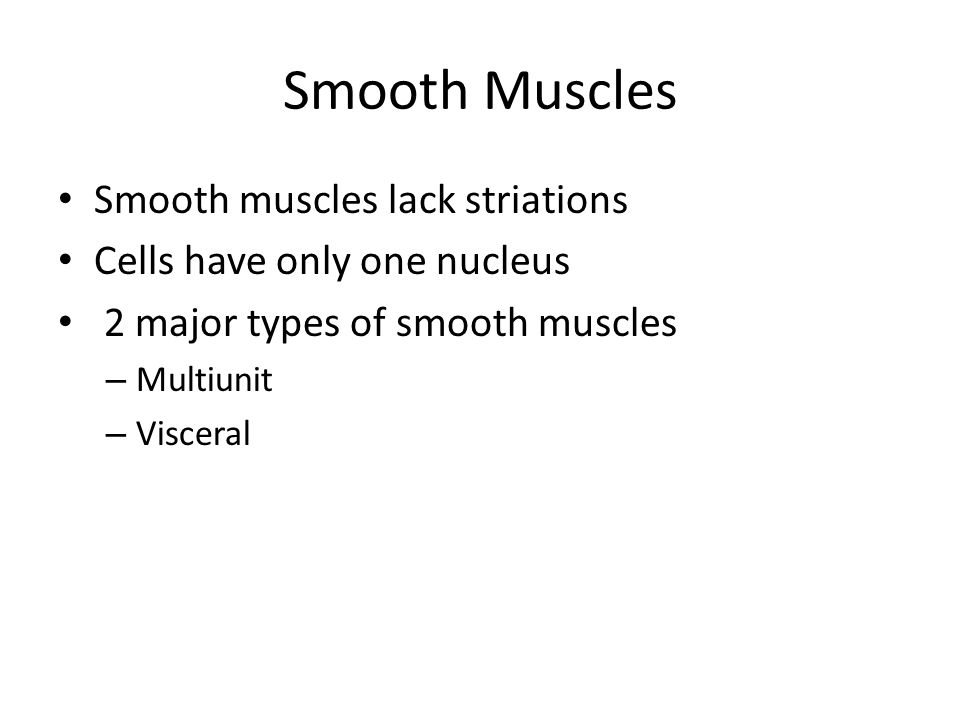 Smooth Muscles Smooth muscles lack striations