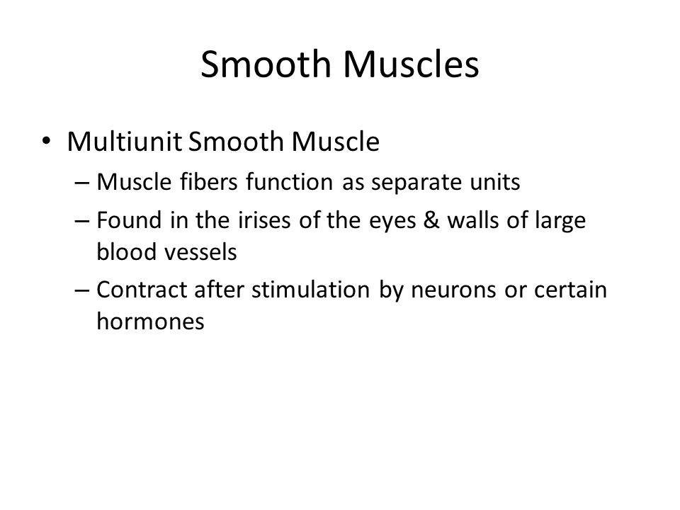Smooth Muscles Multiunit Smooth Muscle