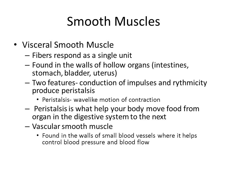 Smooth Muscles Visceral Smooth Muscle Fibers respond as a single unit