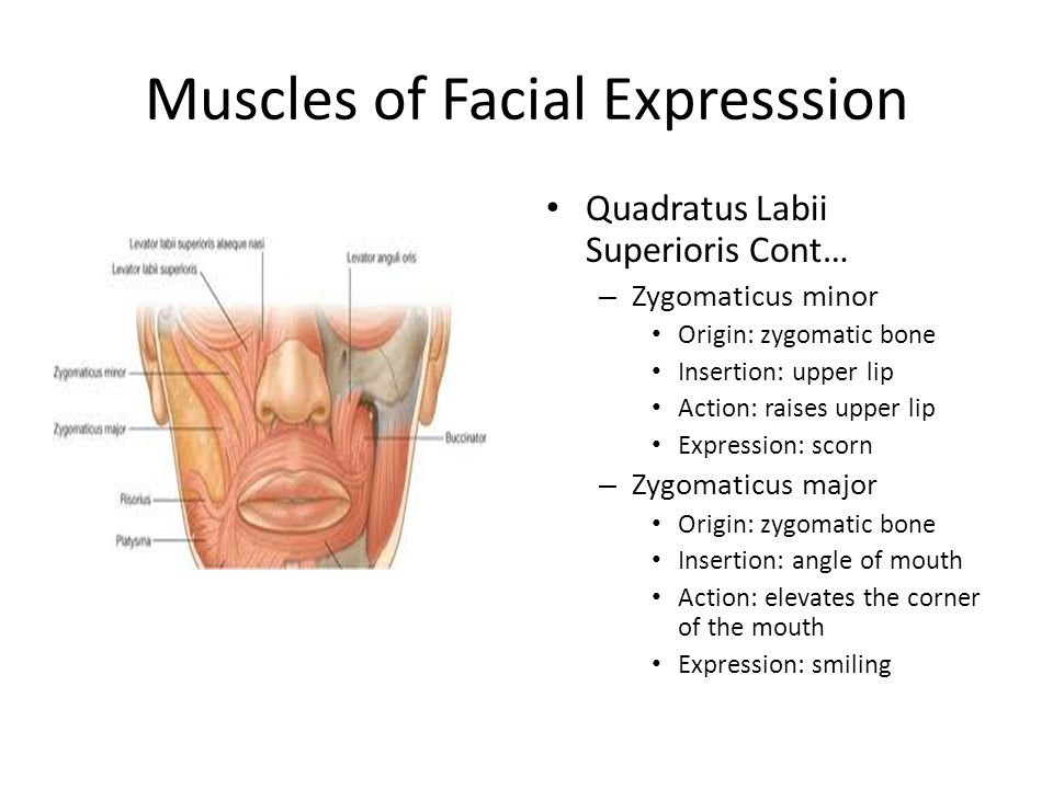 Muscles of Facial Expresssion