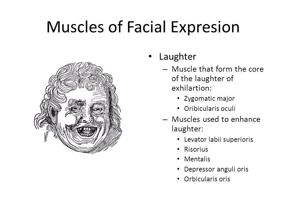 Muscles of Facial Expresion