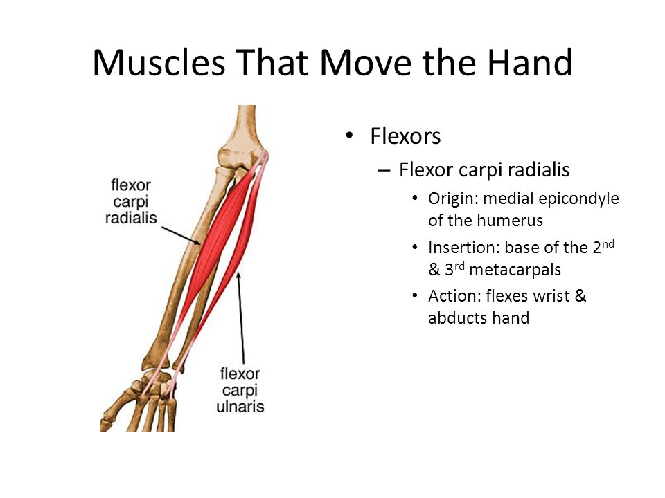 Muscles That Move the Hand