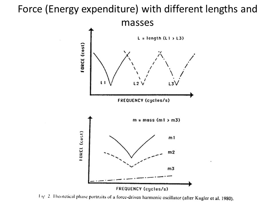 Force (Energy expenditure) with different lengths and masses