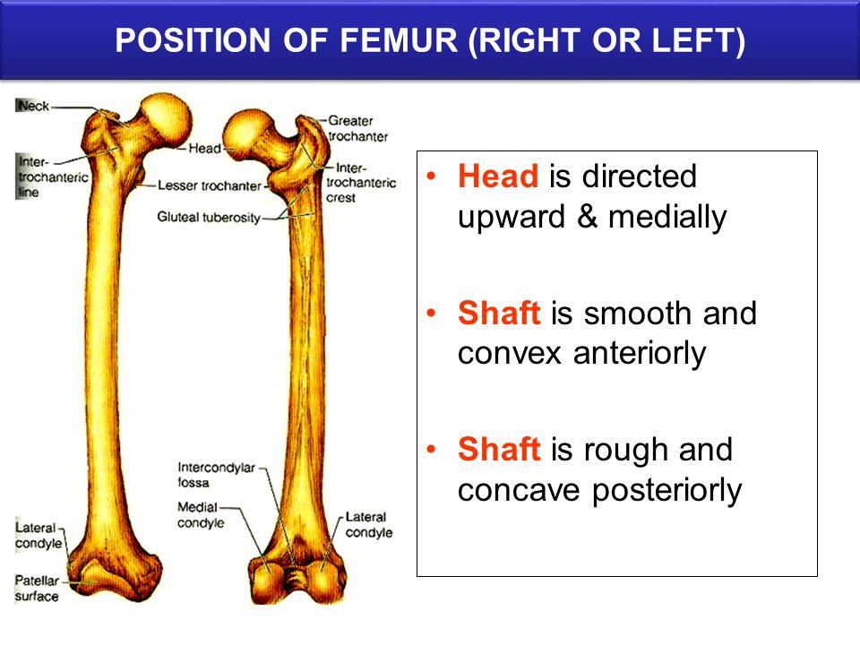 POSITION OF FEMUR (RIGHT OR LEFT)