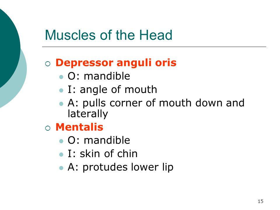 Muscles of the Head Depressor anguli oris O: mandible