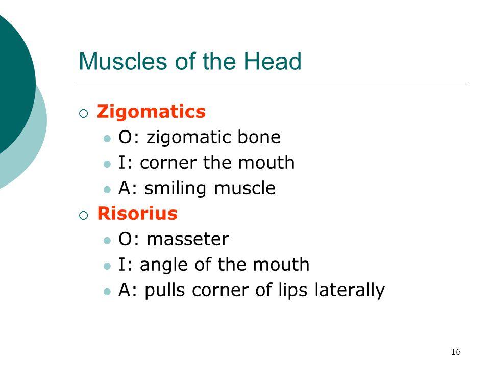 Muscles of the Head Zigomatics O: zigomatic bone I: corner the mouth