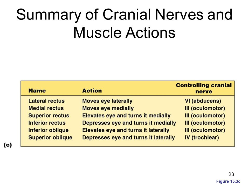 Summary of Cranial Nerves and Muscle Actions