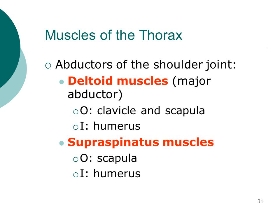 Muscles of the Thorax Abductors of the shoulder joint: