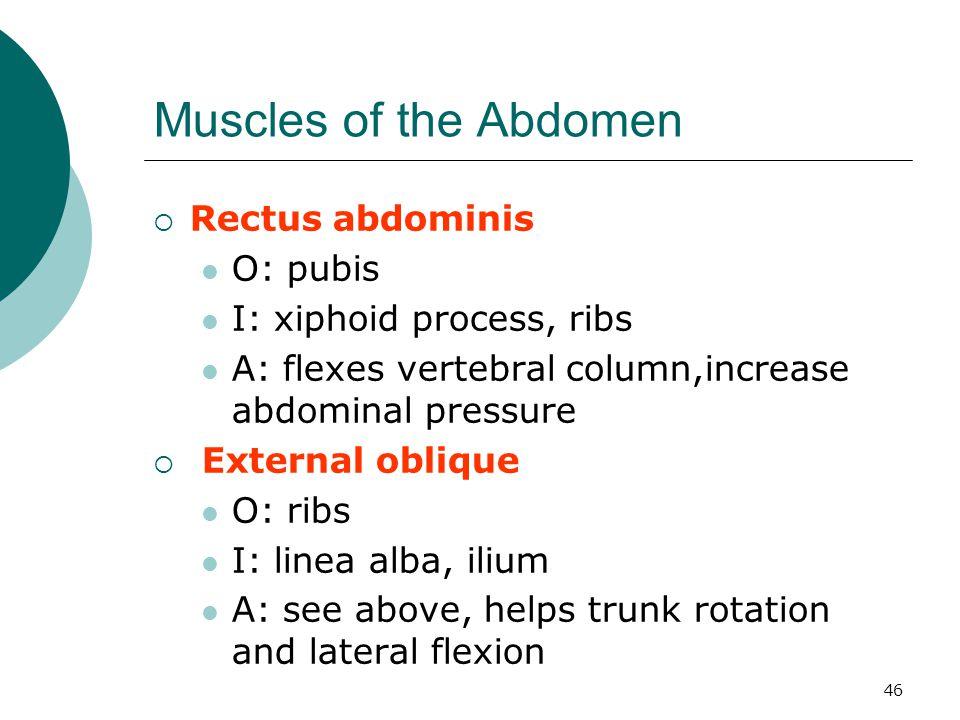 Muscles of the Abdomen Rectus abdominis O: pubis