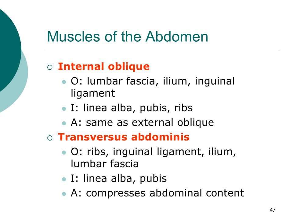 Muscles of the Abdomen Internal oblique