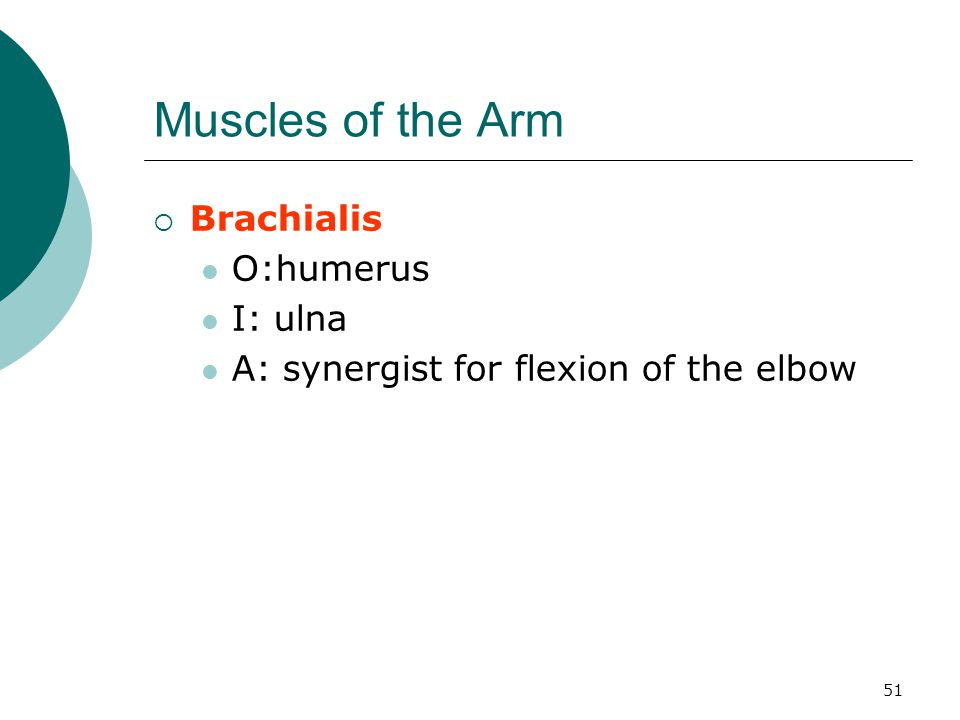 Muscles of the Arm Brachialis O:humerus I: ulna