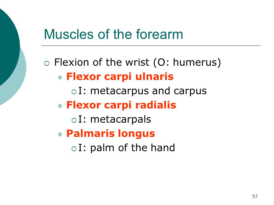 Muscles of the forearm Flexion of the wrist (O: humerus)