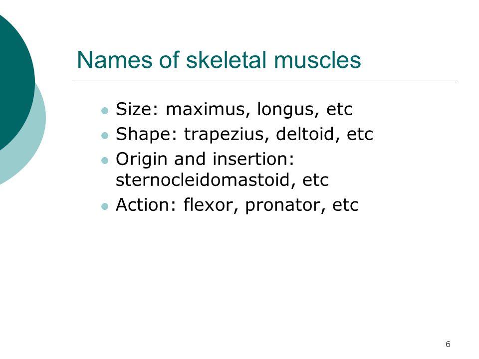 Names of skeletal muscles
