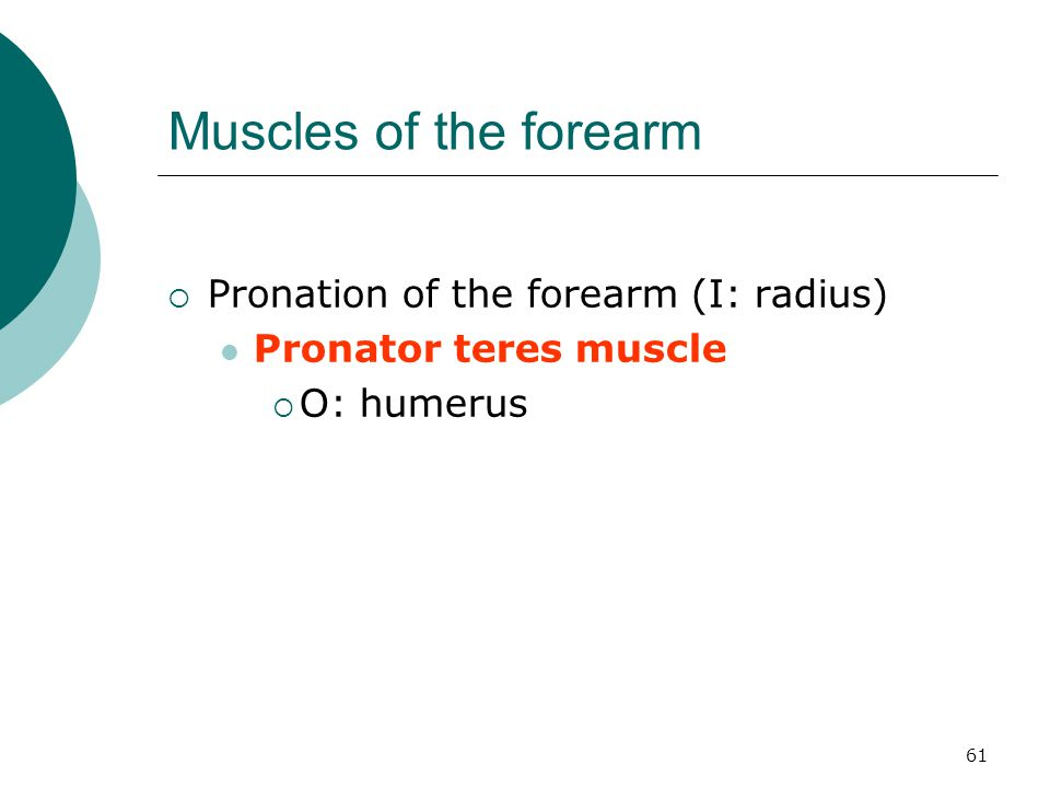 Muscles of the forearm Pronation of the forearm (I: radius)