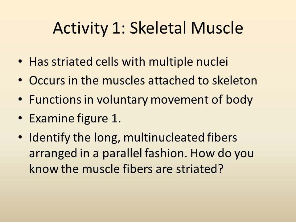 Activity 1: Skeletal Muscle