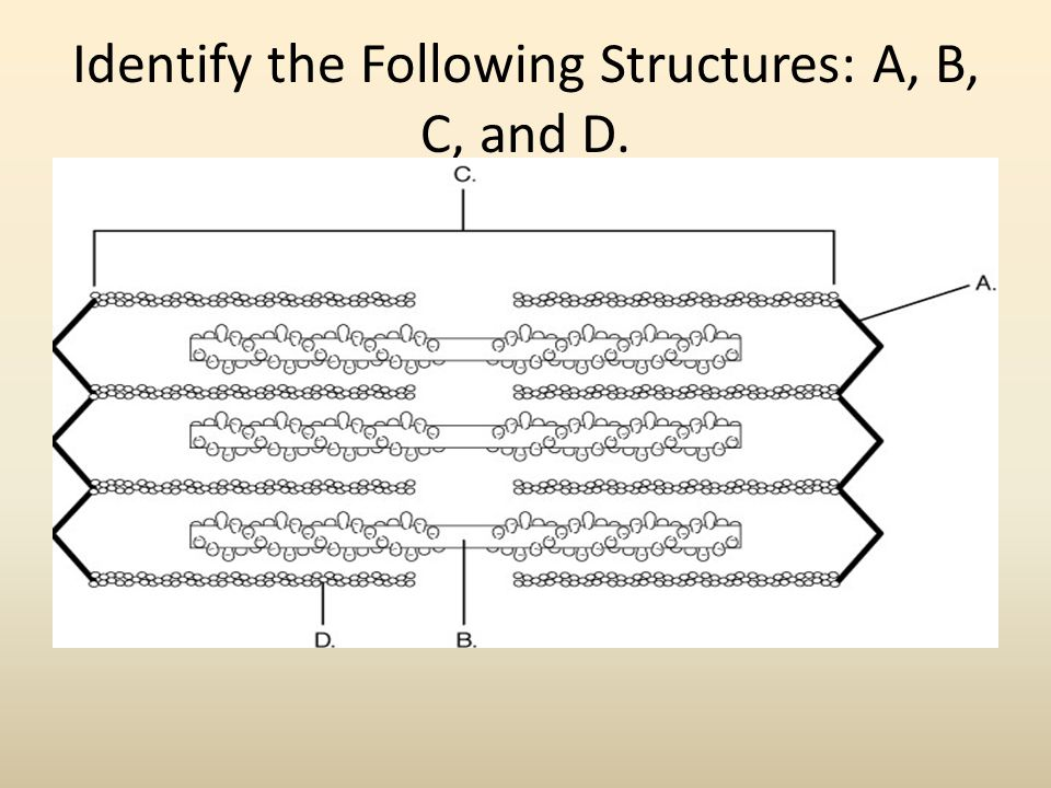 Identify the Following Structures: A, B, C, and D.