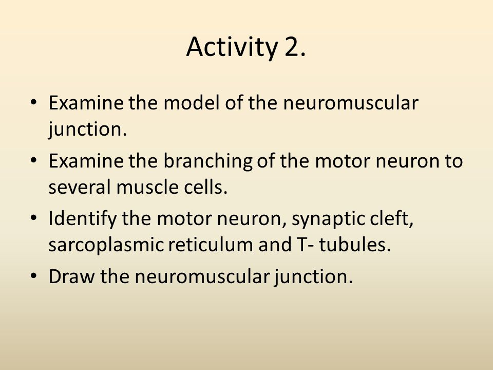 Activity 2. Examine the model of the neuromuscular junction.