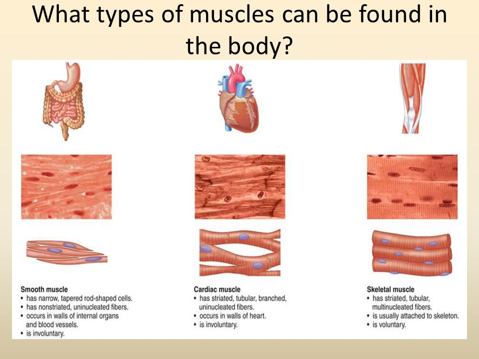 What types of muscles can be found in the body