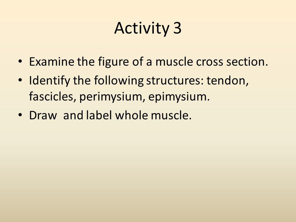 Activity 3 Examine the figure of a muscle cross section.