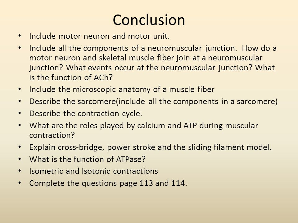 Conclusion Include motor neuron and motor unit.