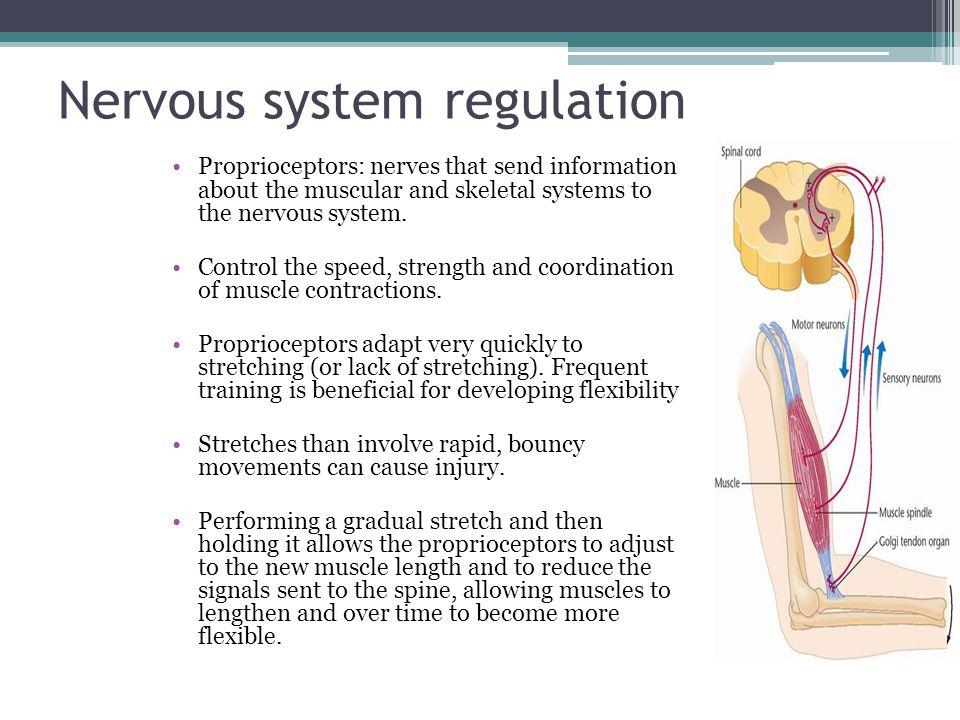 Nervous system regulation