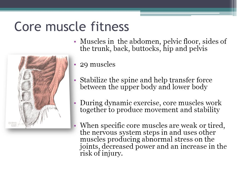 Core muscle fitness Muscles in the abdomen, pelvic floor, sides of the trunk, back, buttocks, hip and pelvis.