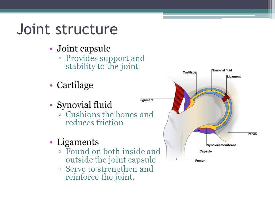Joint structure Joint capsule Cartilage Synovial fluid Ligaments