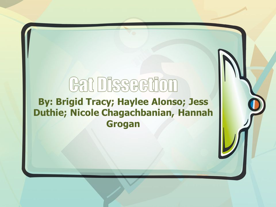 Cat Dissection By: Brigid Tracy; Haylee Alonso; Jess Duthie; Nicole Chagachbanian, Hannah Grogan