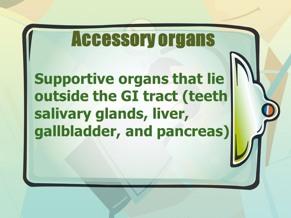 Accessory organs Supportive organs that lie outside the GI tract (teeth salivary glands, liver, gallbladder, and pancreas)