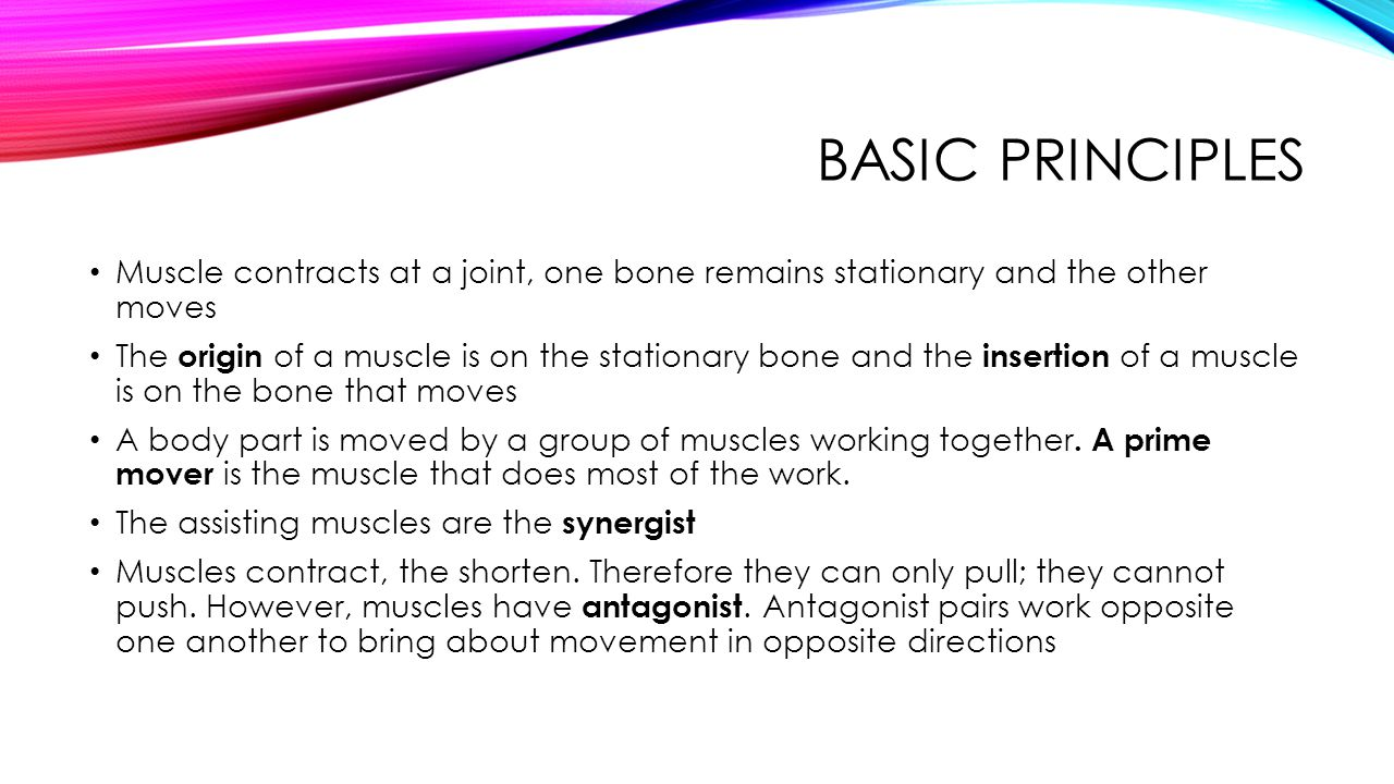 Basic Principles Muscle contracts at a joint, one bone remains stationary and the other moves.