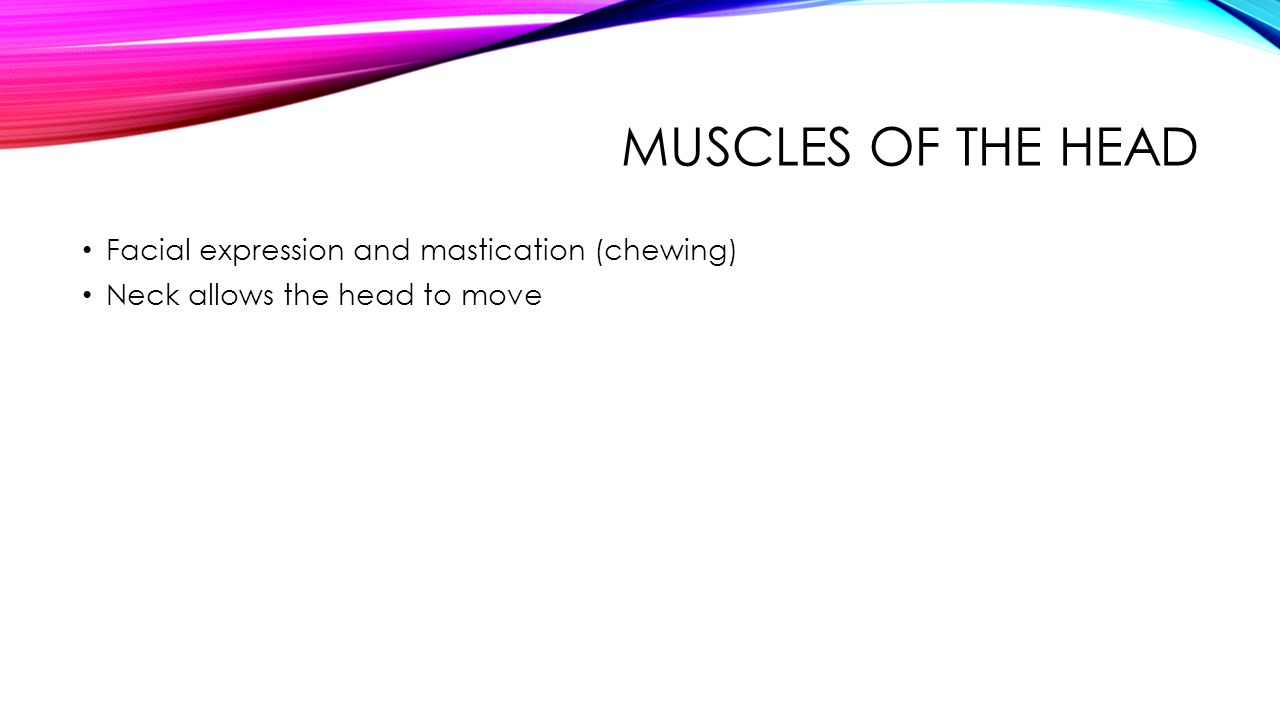 Muscles of the Head Facial expression and mastication (chewing)
