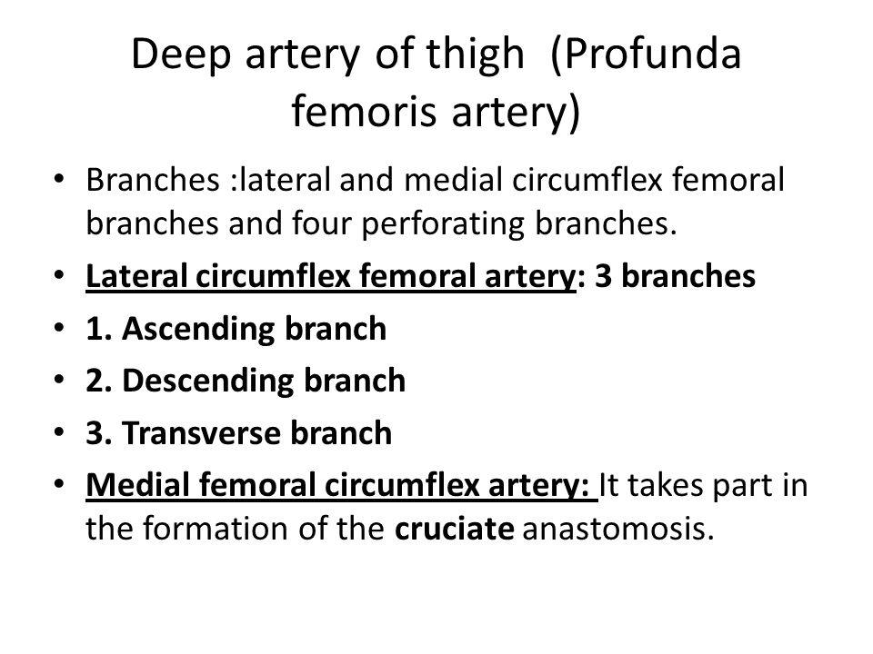Deep artery of thigh (Profunda femoris artery)