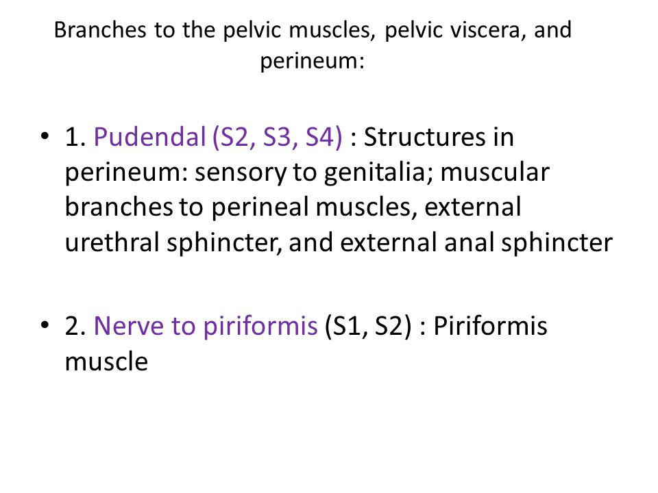 Branches to the pelvic muscles, pelvic viscera, and perineum: