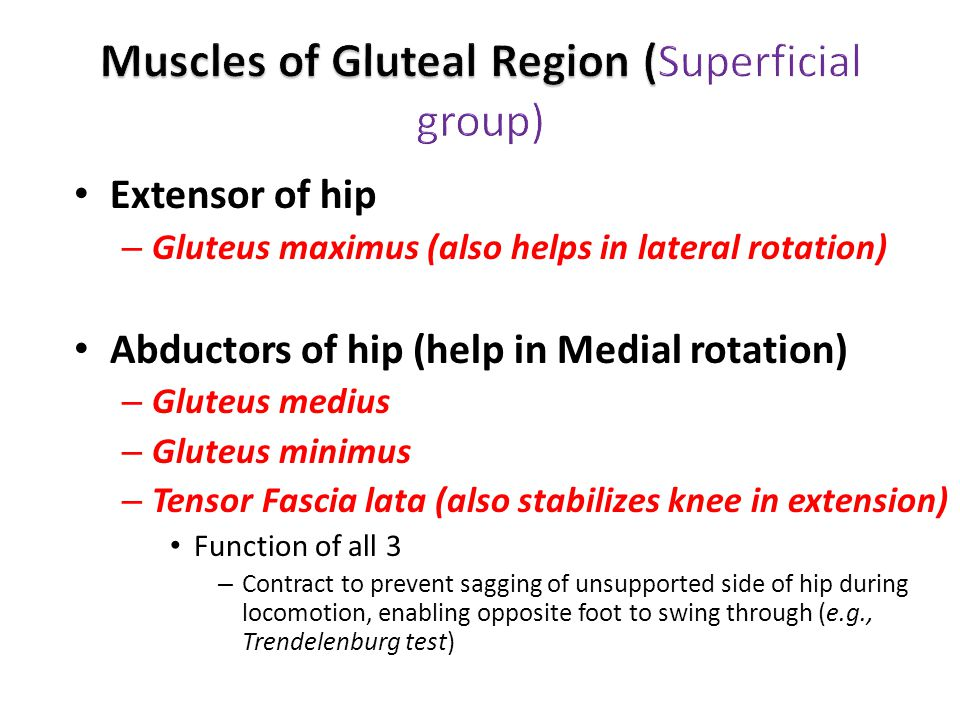 Muscles of Gluteal Region (Superficial group)