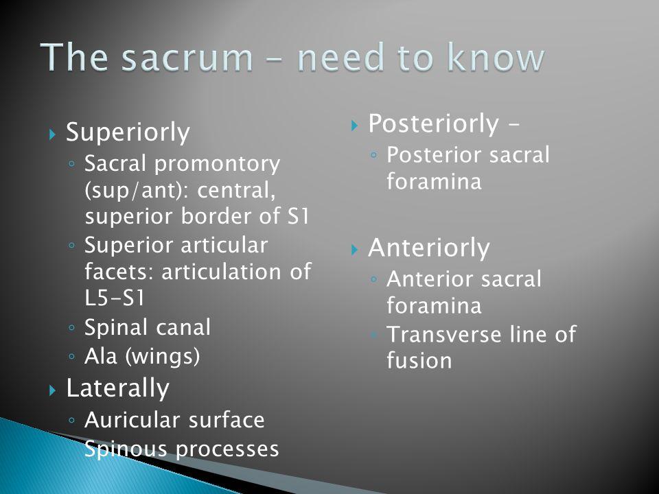 The sacrum – need to know