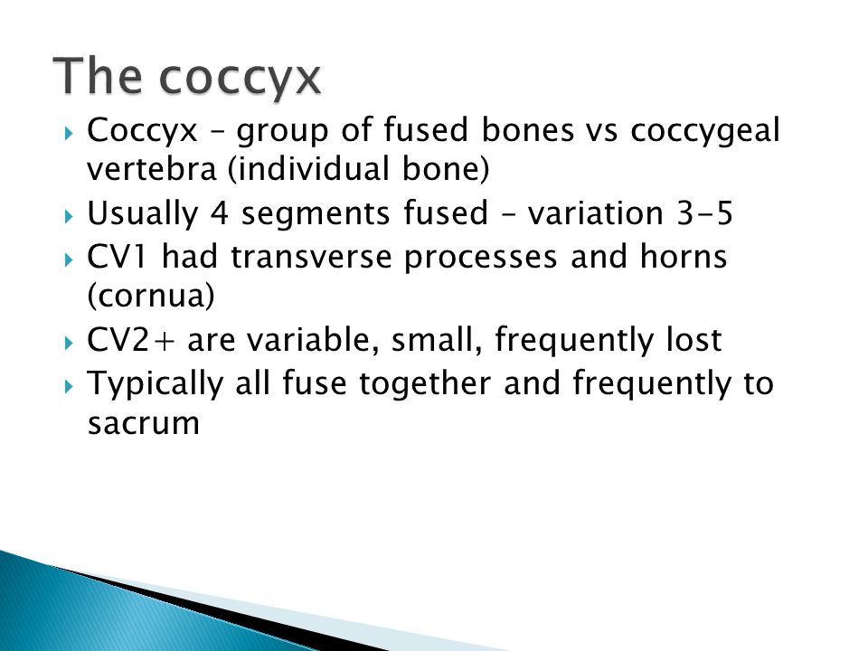 The coccyx Coccyx – group of fused bones vs coccygeal vertebra (individual bone) Usually 4 segments fused – variation 3-5.