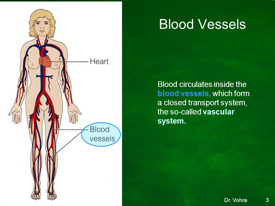 Blood Vessels Blood circulates inside the blood vessels, which form a closed transport system, the so-called vascular system.