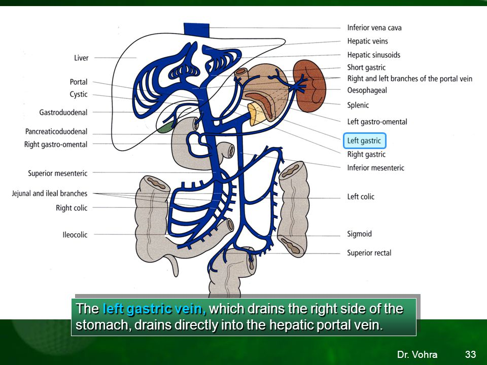 The left gastric vein, which drains the right side of the stomach, drains directly into the hepatic portal vein.