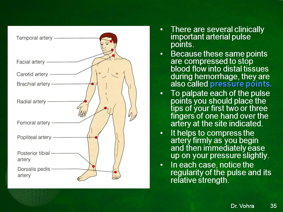 There are several clinically important arterial pulse points.