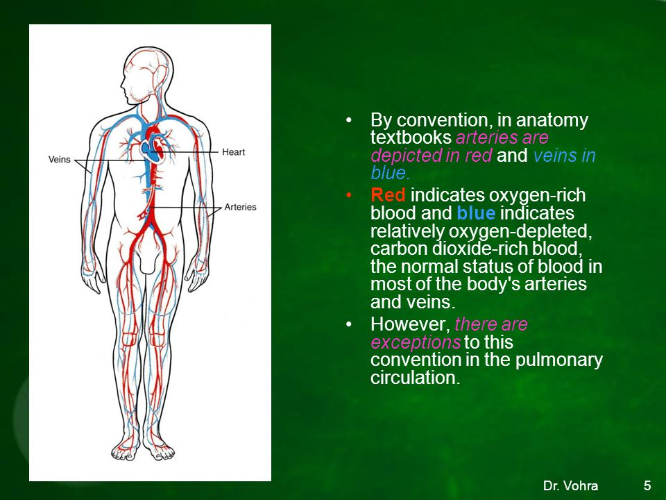By convention, in anatomy textbooks arteries are depicted in red and veins in blue.
