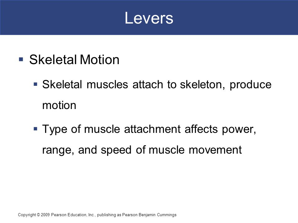 Levers Skeletal Motion