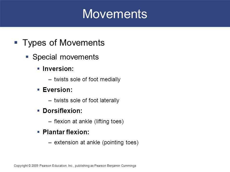 Movements Types of Movements Special movements Inversion: Eversion: